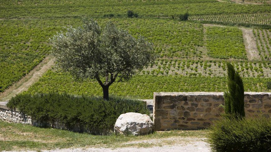 Les vignerons s'engagent pour une viticulture durable dans le vignoble des Côtes du Rhône