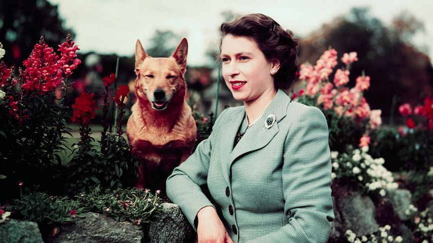 La Reine Elizabeth dans un jardin avec son chien en mars 1953.