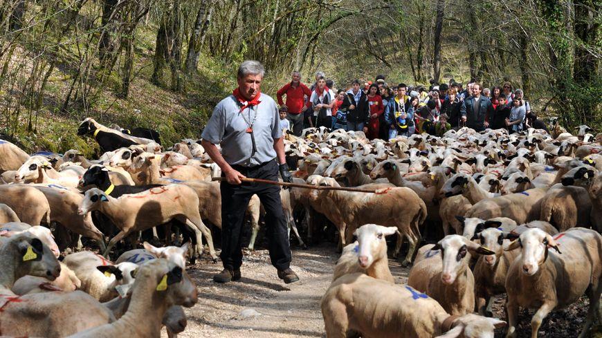 Les éleveurs ovins, caprins ou porcins sont moins familiarisés avec le numérique que les céréaliers, par exemple.
