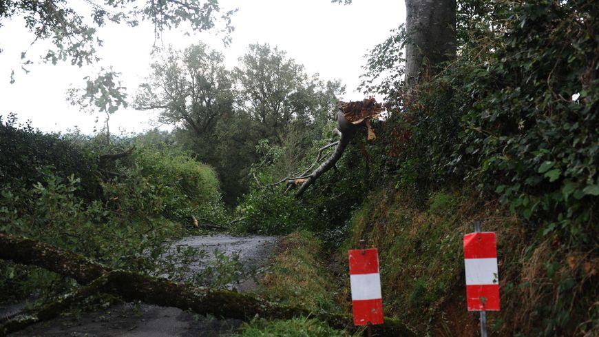 Illustration : beaucoup d'arbres et de branches tombés sur les routes dans le Poitou.