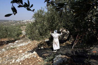 Des colons extrémistes vandalisent les maisons, les cultures. Dans le village Assiryia Al Qabilyia, 90 oliviers ont été déracinés ou brûlés cette année