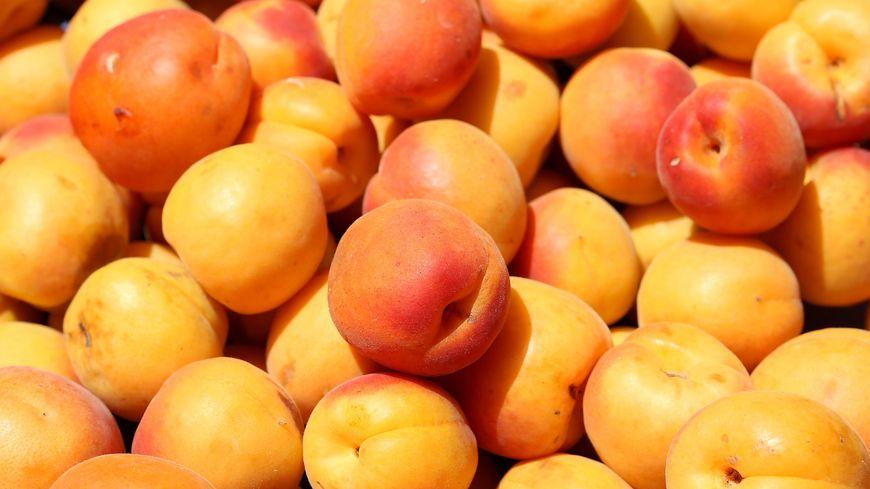 6ecbe9aa740 Michel Houellebecq prédit-il l avenir des abricots rouges du ...