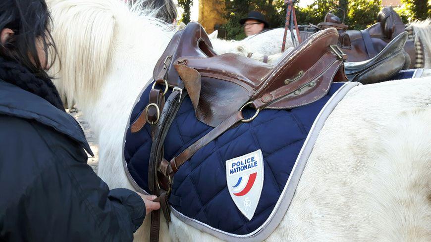 Des chevaux bien identifiables par le grand public