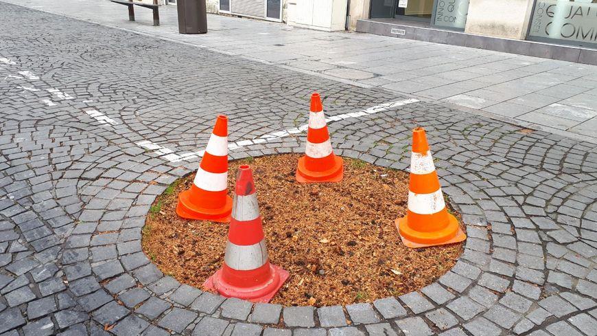 L'arbre du pendu de la place Clémenceau à Pau a été abattu ce mardi