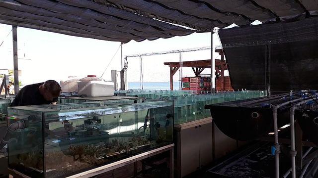 Des aquariums d'eau chaude pour tester les coraux