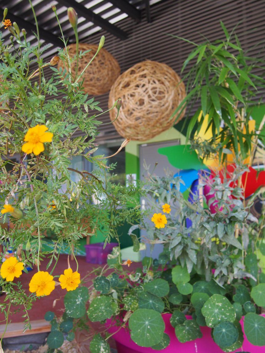 Le jardin sur le toit du CHU de Grenoble