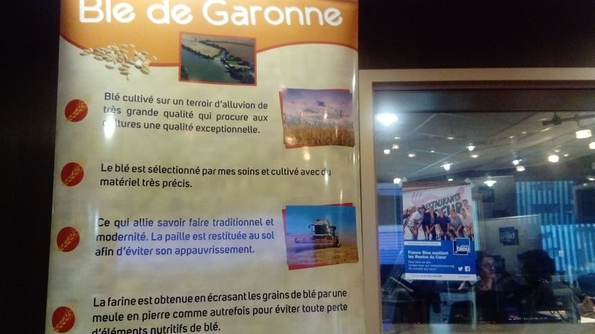 Blé de Garonne