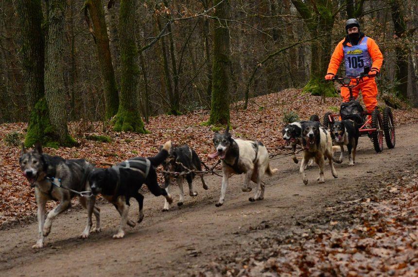 Dans la campagne autour de Bapaume, Serge Métier et ses chiens s'entraînent avec un kart sur les chemins.