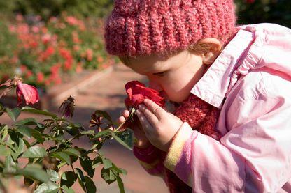 L'odorat, cet organe souvent méprisé mais directement lié à notre mémoire affective.