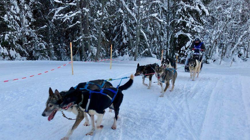 Chaque jour pendant 11 jours, Serge Métier et ses chiens parcourent environ 40 kilomètres dans des domaines skiables.