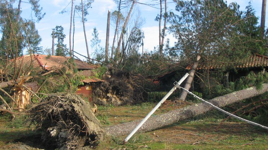 Il est 4h30 ce matin du 24 janvier 2009, quand la tempête Klaus touche les Landes. Au réveil, les dégâts sont impressionnants, comme ici à Sabres