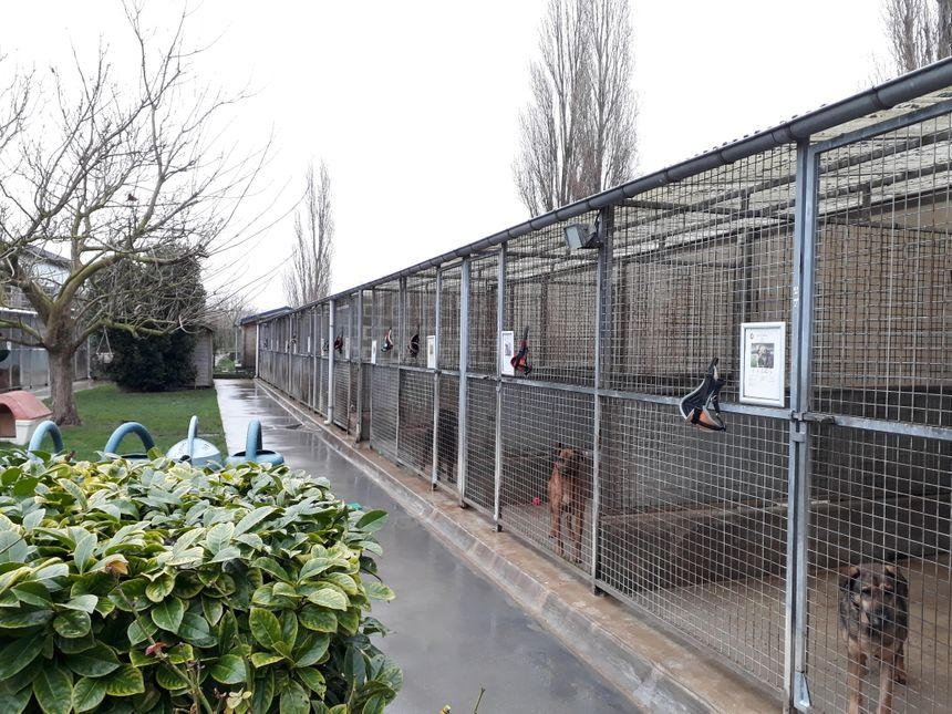 Refuge SPA Cabourg (Calvados)
