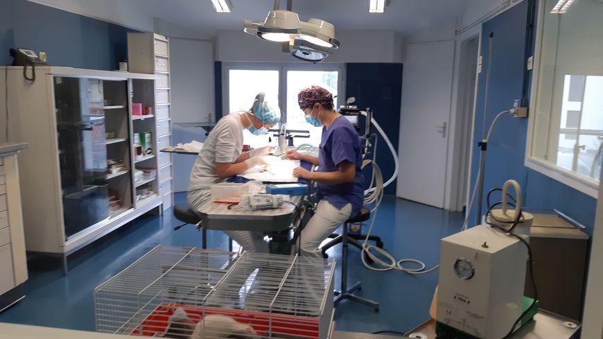 La clinique St Roch à La Rochelle assure désormais des urgences vétérinaires 24h/24, de nuit les week-end et jours fériés