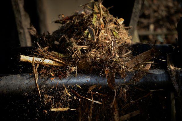 Le bois ne représenterait que 20% de la matière utilisée comme biomasse
