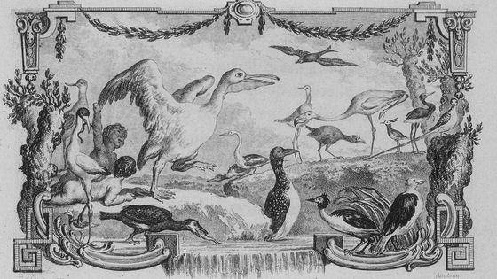 l'Histoire naturelle des oiseaux (t. VIII). Jacques de Sève (dessin); Georges-Louis Leclerc Buffon (aut. du texte). Bandeau de la page 1 - 1781