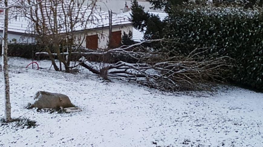 Dégâts de la tempête Gabriel dans un jardin creusois