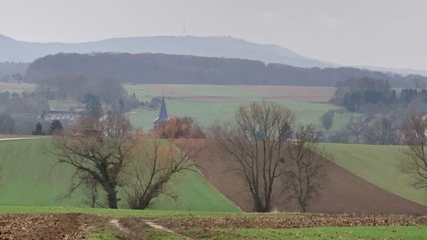 Drachenbronn-Birlenbach, châtaigners