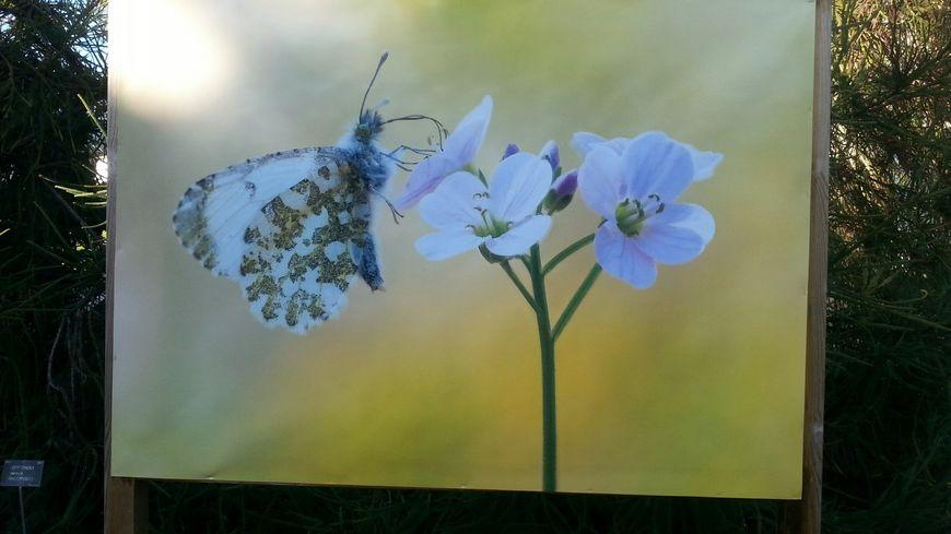 Jusqu'au 10 mars, le jardin botanique propose une immersion dans le monde des papillons