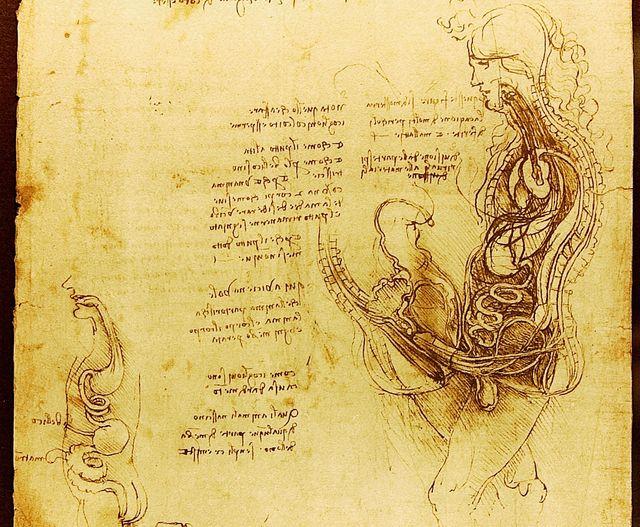 Dessin d'un coît par Leonard de Vinci (vers 1492)