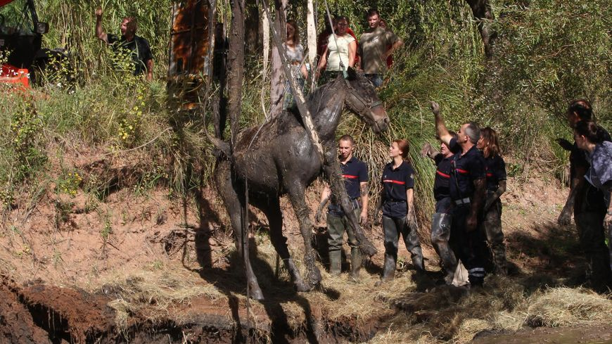 24 sapeurs-pompiers sont intervenus à Hilsenheim pour sauver un cheval enlisé dans la rivière (photo d'illustration d'une autre opération)