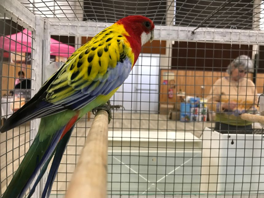Si vous préférez les oiseaux multicolores, il y en a aussi sur la bourse de Trélissac.