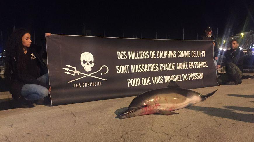 Depuis le début de l'année, 600 dauphins sont morts le long des côtes françaises.