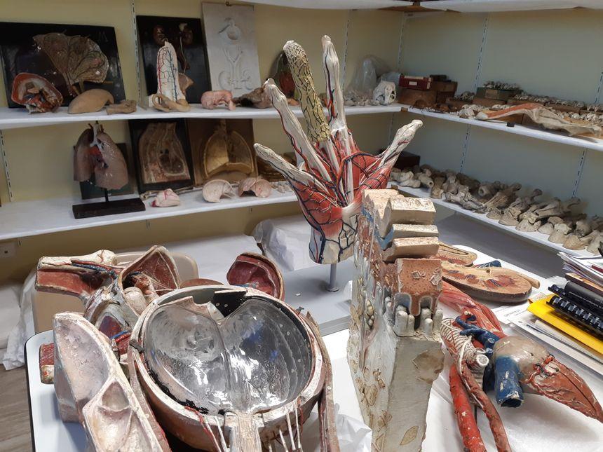 Une partie de la réserve du musée de l'écorché d'anatomie