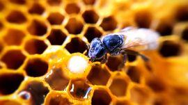 Et si tu devenais une abeille ?...