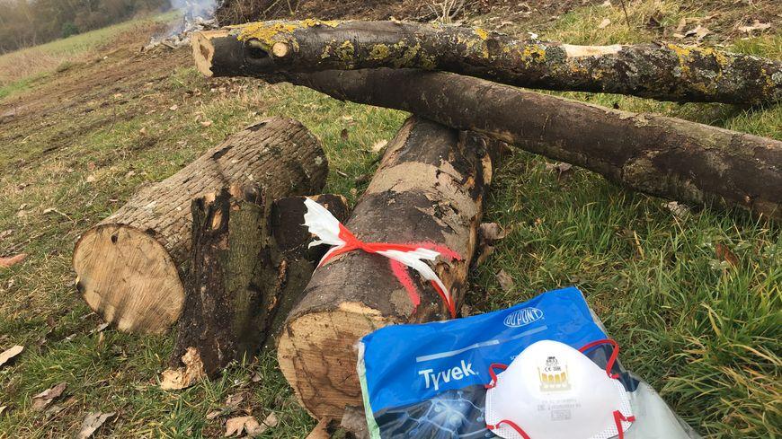 Les arbres atteints de la maladie de la suie de l'érable sont forcément coupés et brûlés