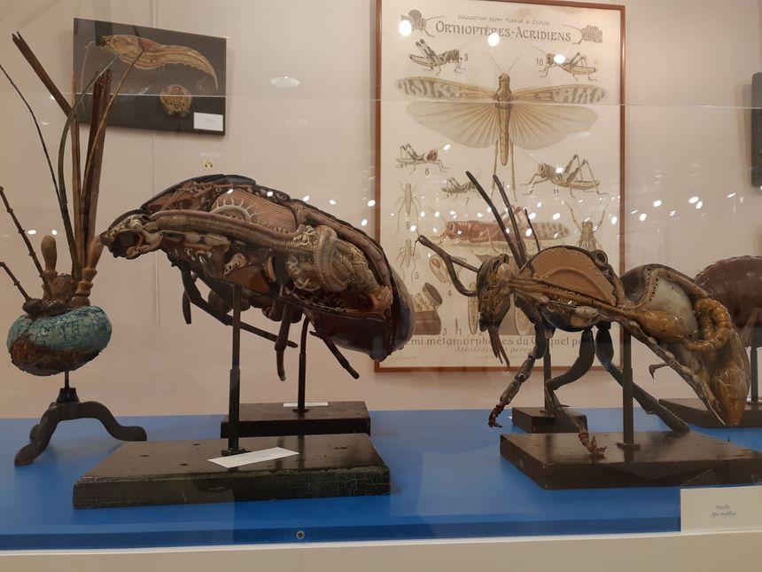 Une abeille de plus de cinquante centimètres, forcément,  ça va faire le bzz bzz