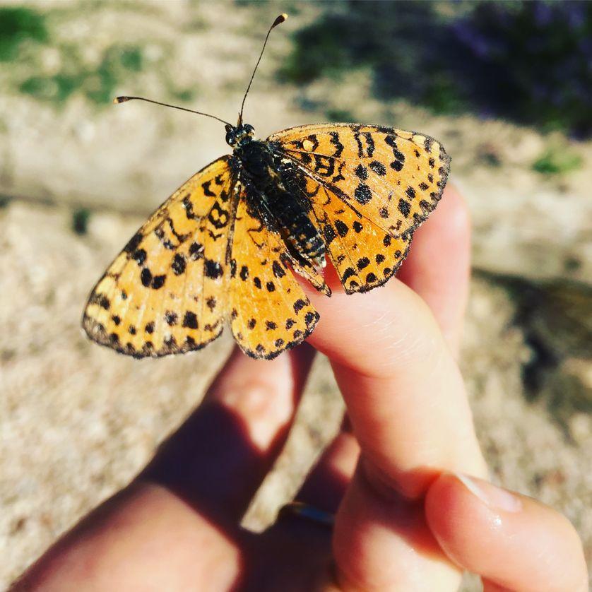 Peut-on reconquérir les papillons ?