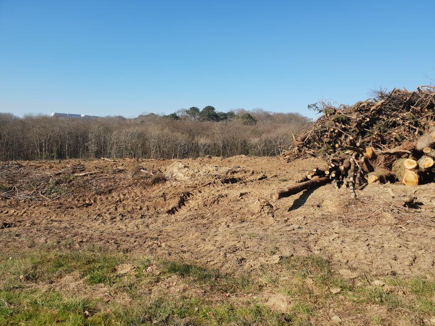 """""""Ce bois servait de ceinture verte a la ville de Bayonne, et là on le supprime du jour au lendemain"""", regrette le CADE"""