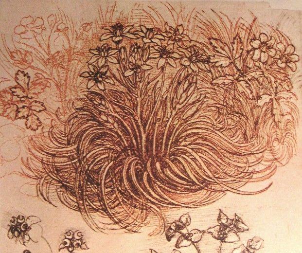Dessin d'un étoile de Bethléem par Léonard de Vinci
