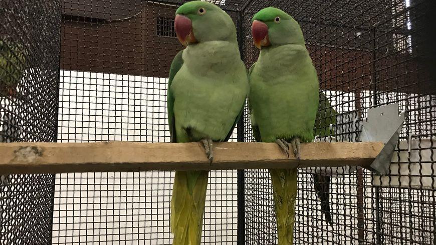 Des oiseaux d'un vert uniforme, ou au contraire multicolores, et de toutes les tailles ... il y en a pour tous les goûts.