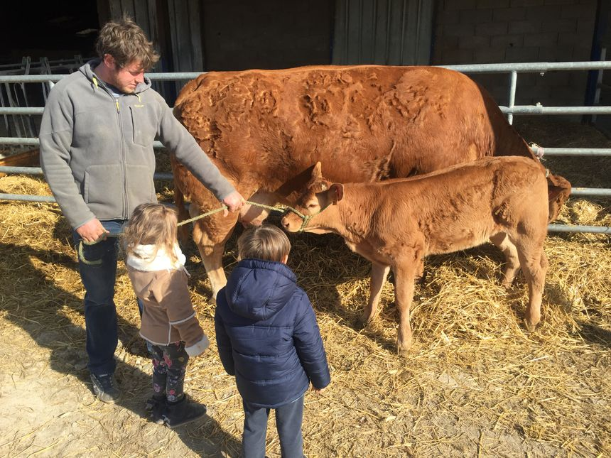Olympe le petit veau avec la famille Jean à Sencenac