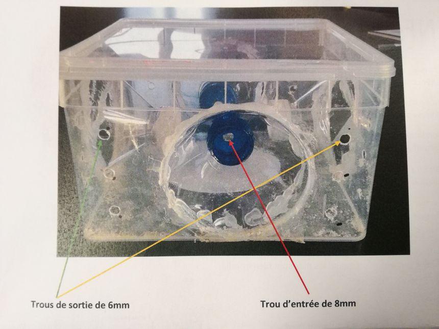 Percez les bouchons d'un trou de 8mm et prévoir une série de trous de 6mm pour laisser s'échapper les autres insectes - Radio France