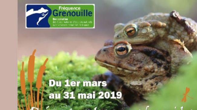 Fréquence grenouille 2019