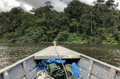 Promenade en pirogue dans la forêt guyanaise