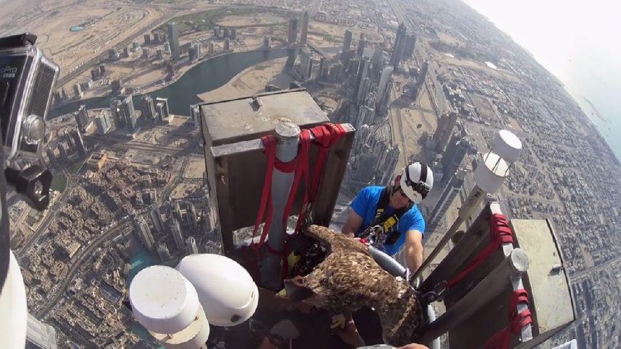 """""""Un aigle à Dubaï"""" ce vendredi soir sur Usuhaïa TV (image Ushuaïa TV - High 5 prod - Freedom - Aigles du Léman)"""