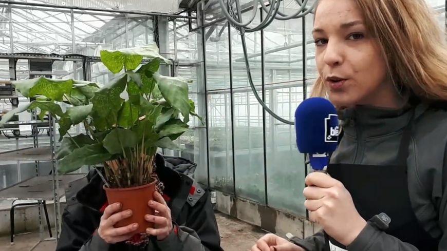 Rempoter une plante d'intérieur avec Sylvie Vogel