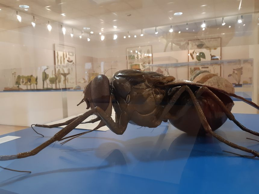 Certainement une cousine de la mouche de David Cronenberg