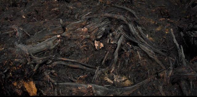 Les brulis sont pratiqués pour preparer la terre aux plantations de palmiers à huille en Indonésie