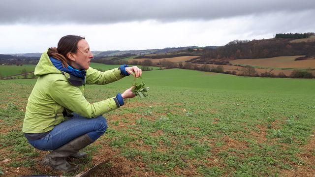 Aude Pelletier (Chambre d'agriculture de l'Ariège) devant un champ en semis direct