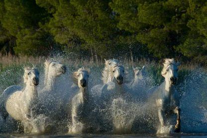 Des chevaux au secours des personnes lourdement paralysées