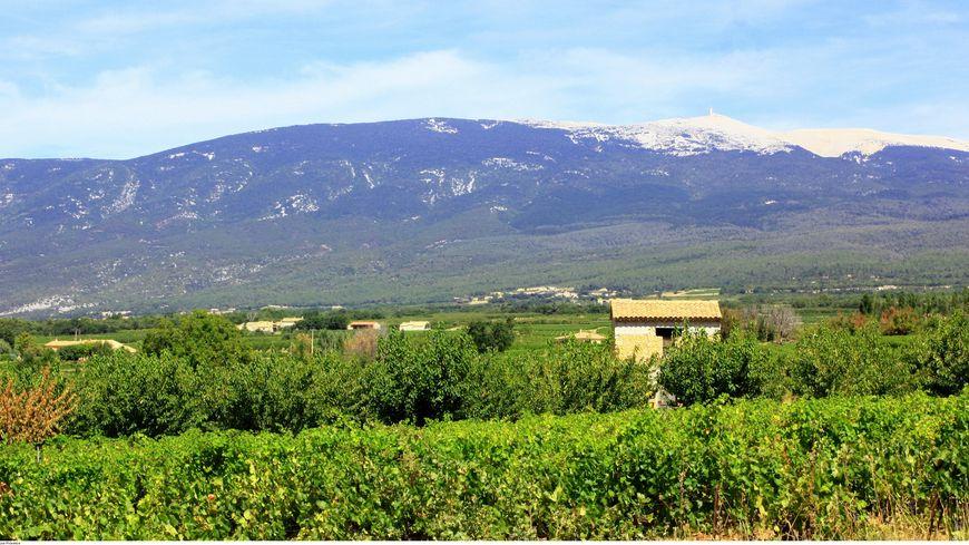 Cabanon au milieu des vignes
