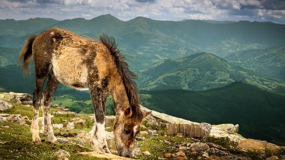La Rhune : le pays de Ramuntcho et son pottok