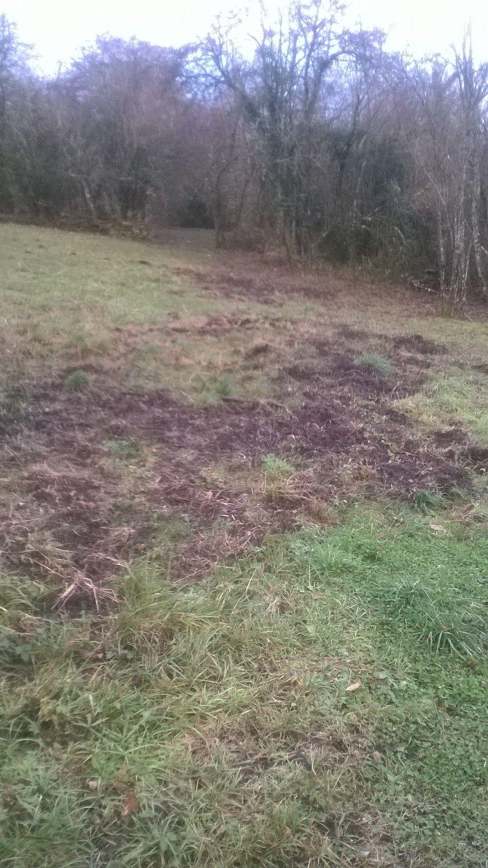 Exemple de dégâts causés par les sangliers dans les environs de Besançon