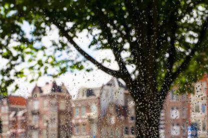 L'eau de pluie d'Amsterdam pour faire de la bière