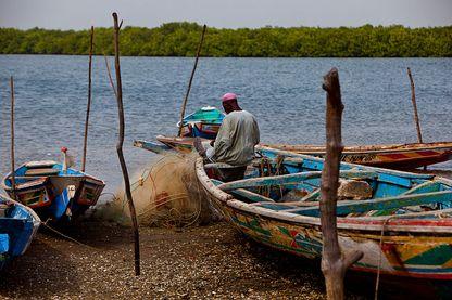Sauver la magrove pour sauver l'activité de pêche