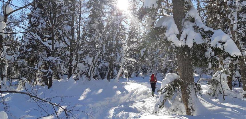 La rando commence en forêt. Presque seul au monde !